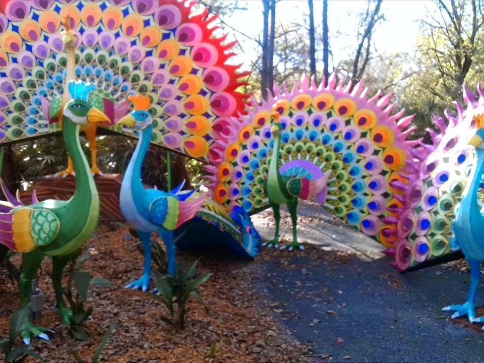 Beautiful peacock lanterns.