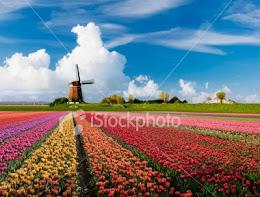 Flower desire:-         Rainbow Flower