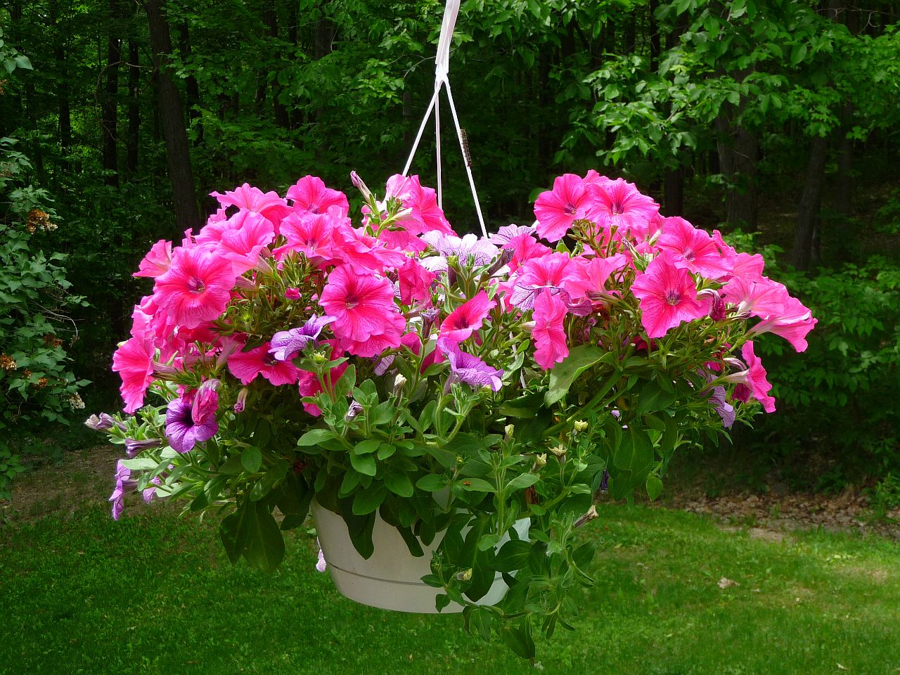 Welcome to Hanging basket flowers