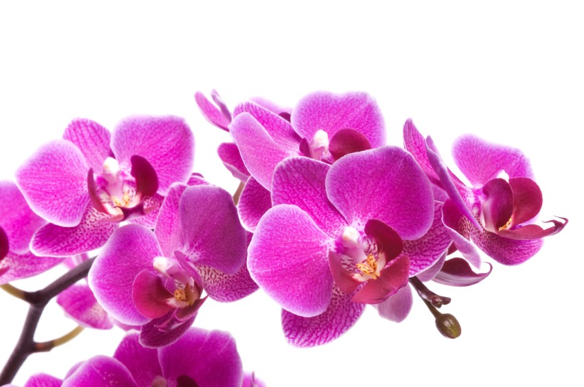 orchidee gamm vert
