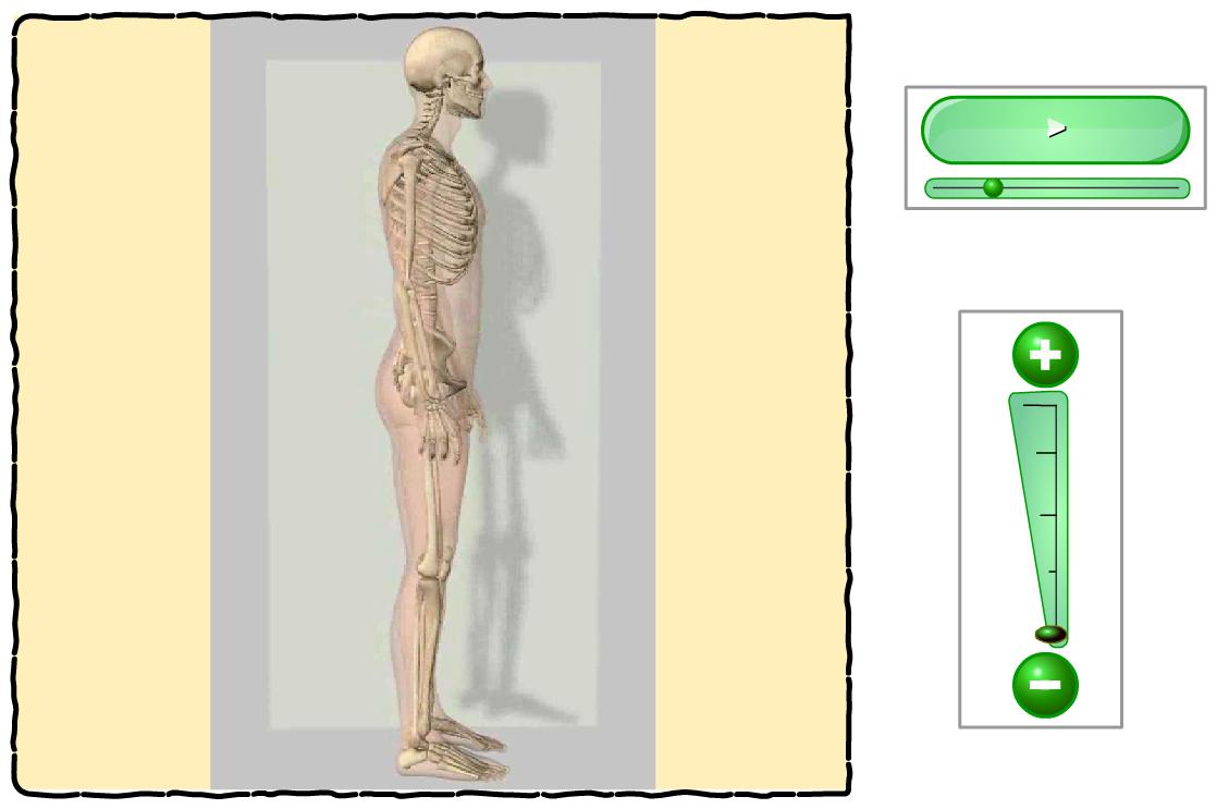 http://www.primerodecarlos.com/TERCERO_PRIMARIA/octubre/Unidad2/actividades/cono/esqueleto/visor.swf