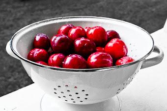 island plums . . .