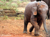 China Fuels East African Elephant Poaching