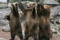 Bears React to Foiling of Synod Plot