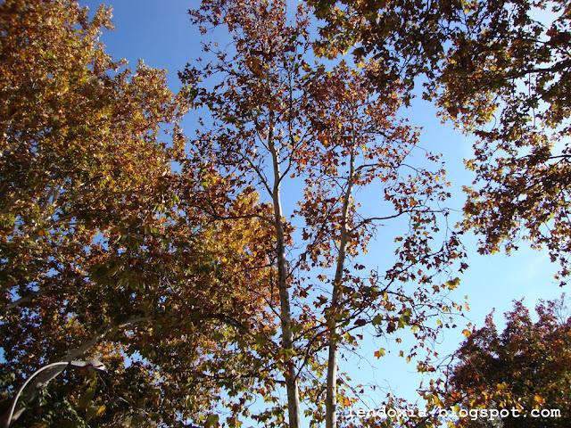 drvece na suncu