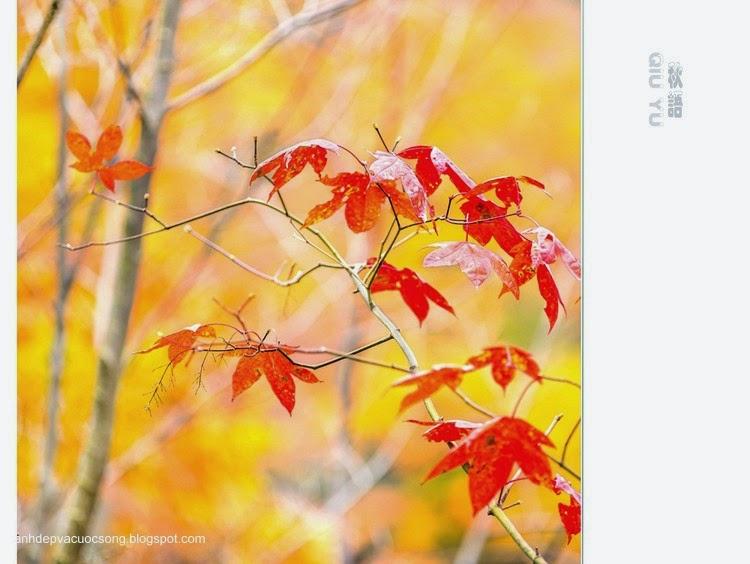 Chiếc lá mùa thu 5