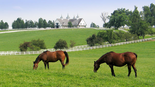 two mares grazing in a green field in kentucky with white fences and white barns on rolling hills in the background
