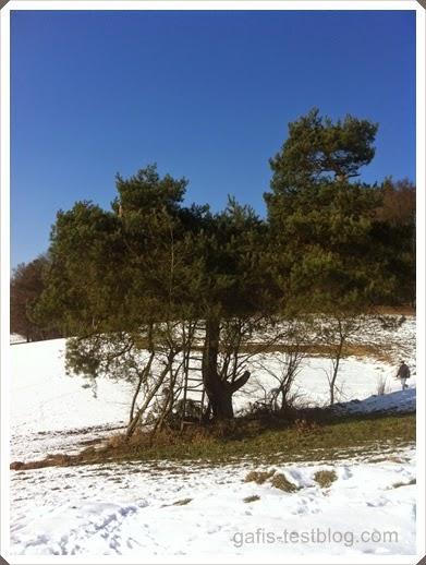 Wunderschöner alter Baum