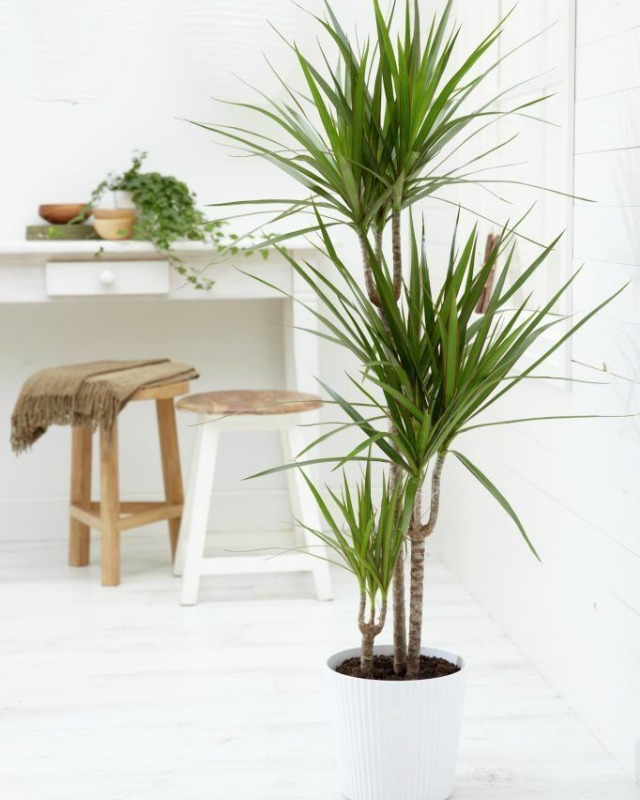 Decoraci n f cil 10 mejores plantas de interior - Plantas de interior para salon ...
