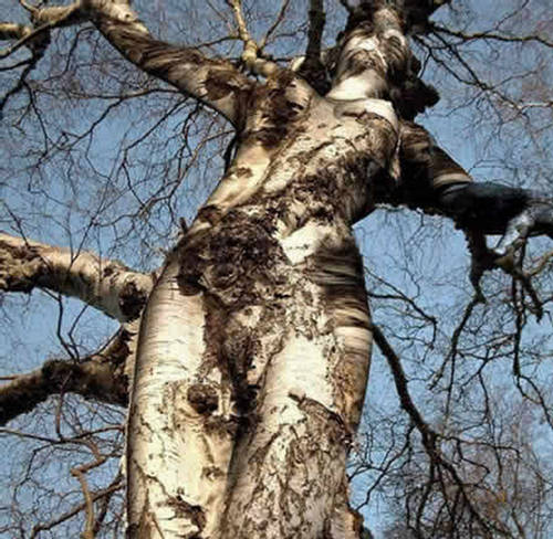 bizarre tree image