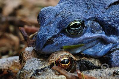Lima Hewan Berwarna Biru Paling Menakjubkan