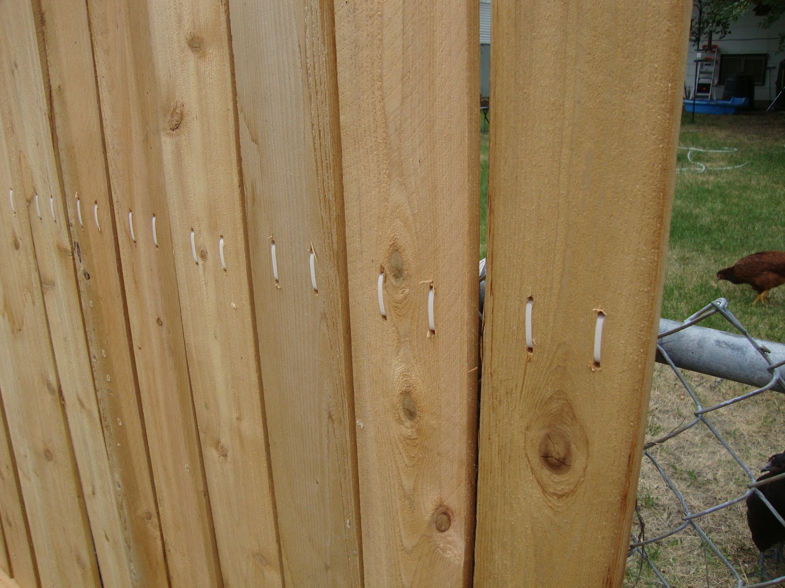 Creative Healings Zip Tie Cedar Fence And Walk In Chicken