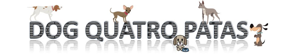 Dog Quatro Patas