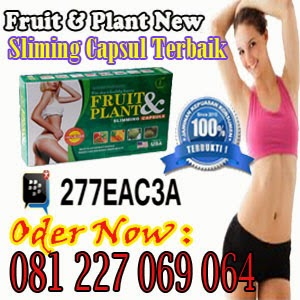 fruit plant original pelangsing badan