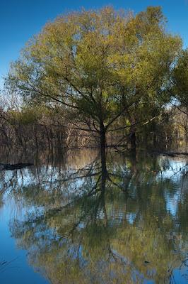 Grapevine Lake Foliage