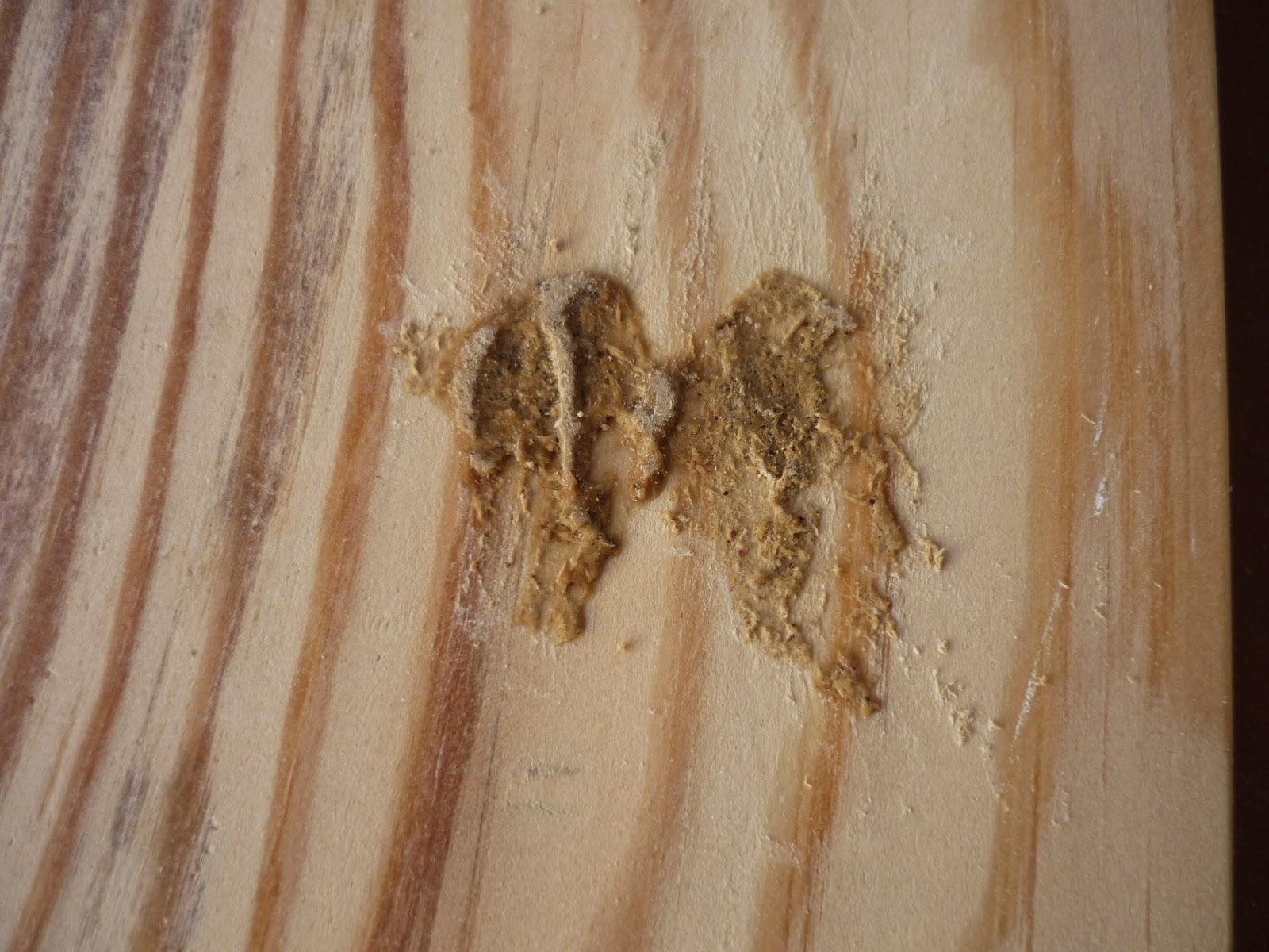 Restauracion y decoracion de madera con serrin y cola - Pasta para reparar madera ...