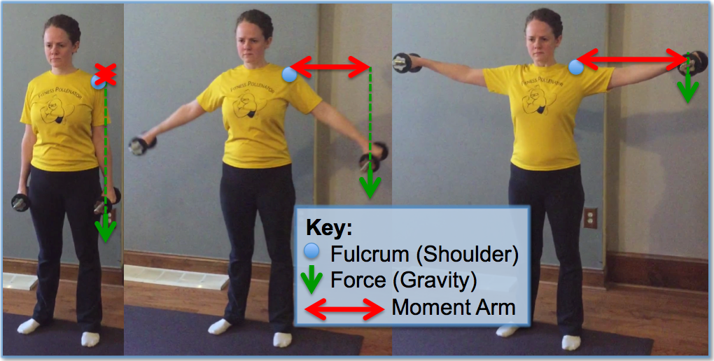 Fitness pollenator brief lessons in biomechanics moment arms for Floor y raise