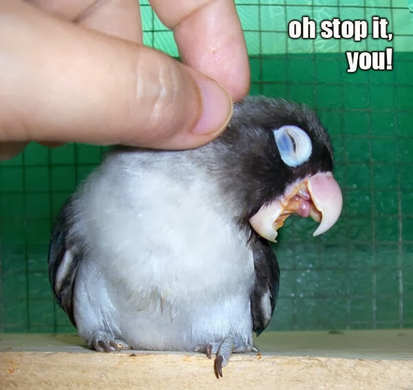 30 Funny animal captions - part 18 (30 pics), bird meme, oh stop it you
