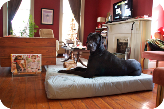 merry christmas zeus - diy great dane bed | sally ann