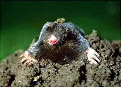 molehill