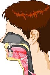 Tratament naturist impotriva laringitei