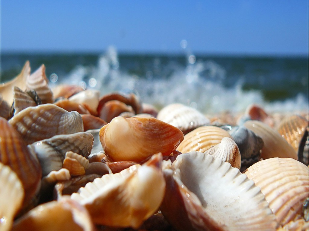 http://1.bp.blogspot.com/-kL3YMRVNaao/TgDmjtMAdZI/AAAAAAAAEt4/gHgt07CV7WQ/s1600/Seashells_on_the_Beach_Wallpaper_2sh5x.jpg