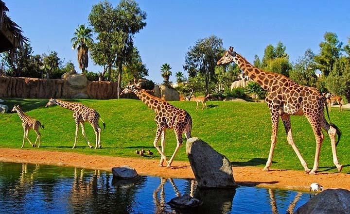 Bioparc Valencia: El zoológico de inmersiva