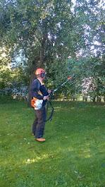 Taajama- ja kaupunkialueiden pihametsuri kannattaa tilata ajoissa keventämään puustonne oksistoa