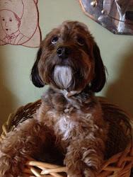 我家の犬 2 ティガ― 7歳