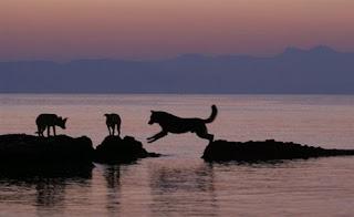 Αδέσποτοι σκύλοι έσωσαν τουρίστα από πνιγμό στην Ιταλία