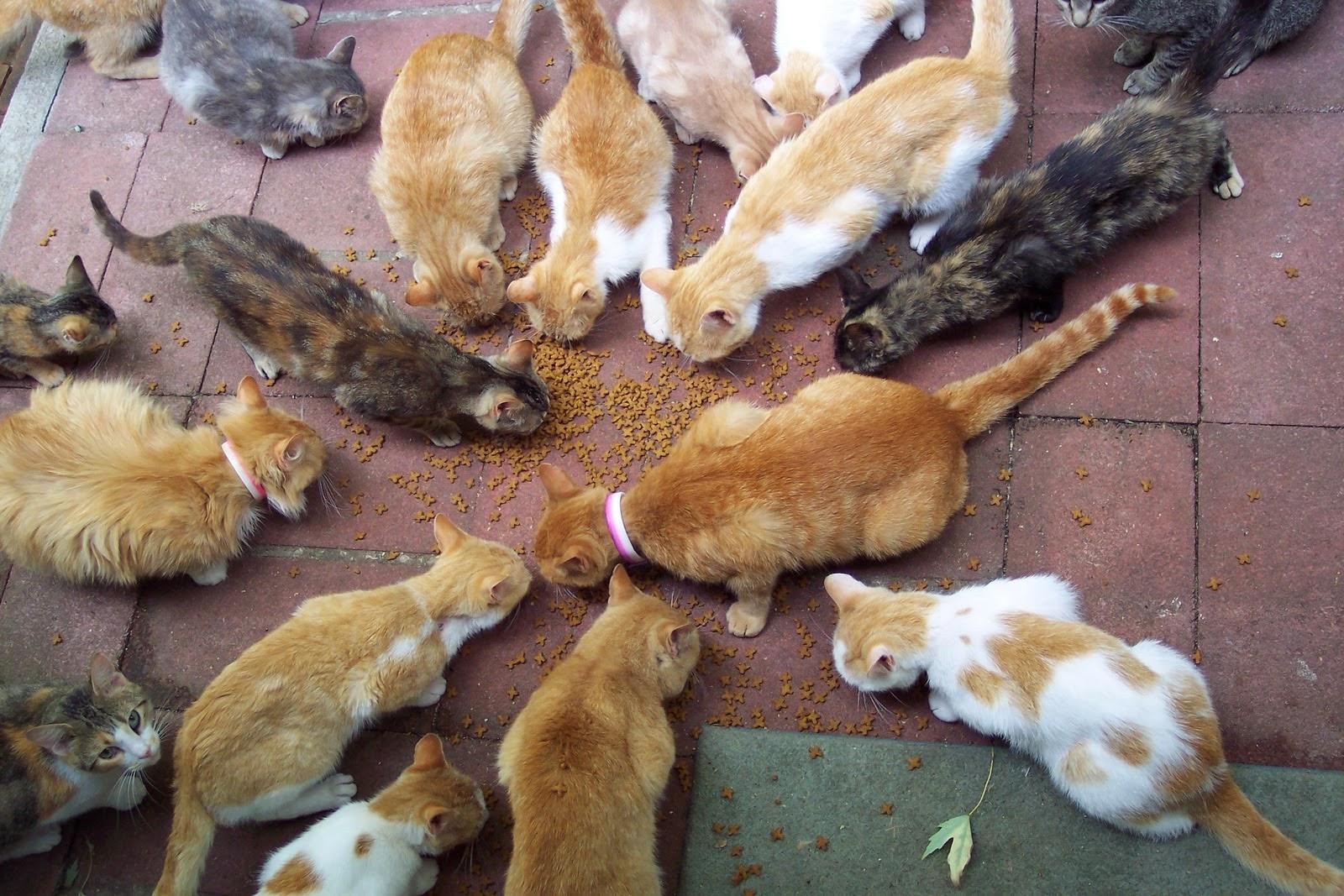 Makanan yang Paling disukai Kucing