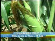 SAO NICOLAU O PROTETOR DAS CHUVAS SALVAI NOSSA AGRICULTURA