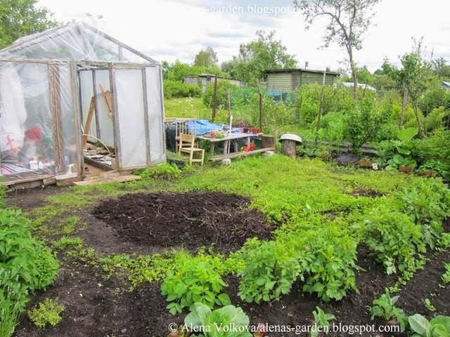 аленин сад, часть3, до, после, участок, дача, освоение участка, целина, сад, огород