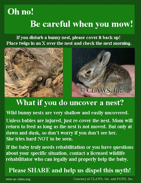 The Bunny Hut: Finding Wild Baby Rabbits: