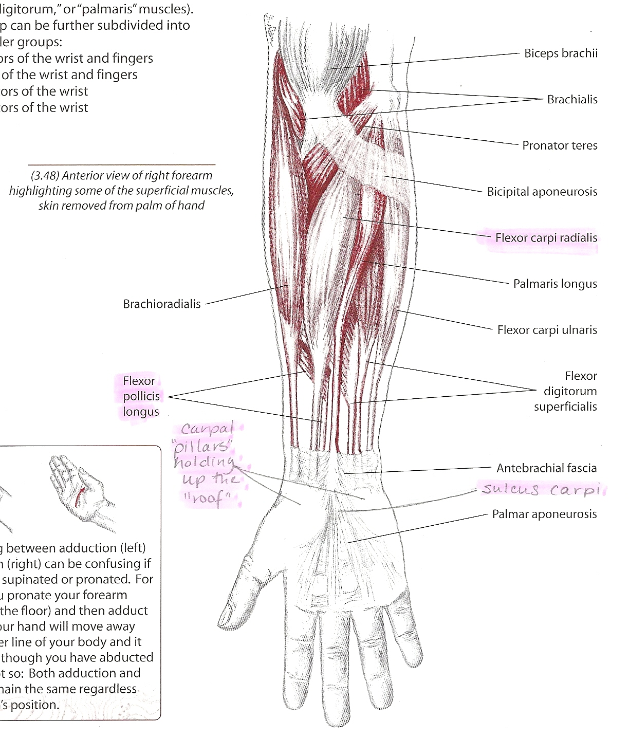 Keeping in Touch: Anatomy Lesson: The Carpal Tunnel