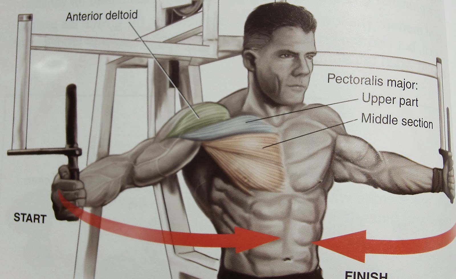 Home workouts for upper chest exercises