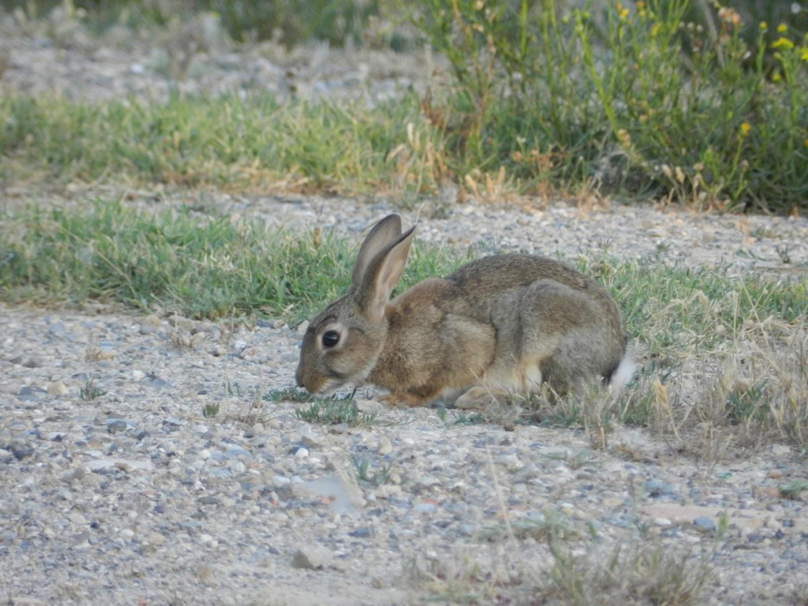 Site de rencontre lapin