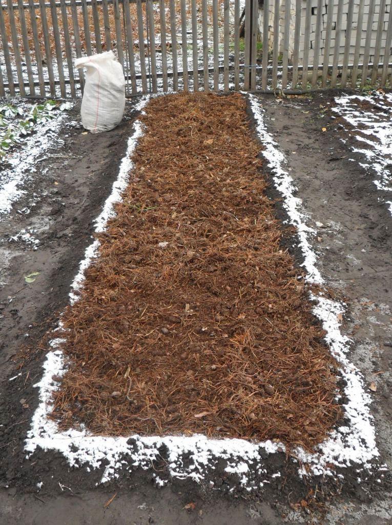 Грядка чеснока укрыта на зиму мульчей из хвои