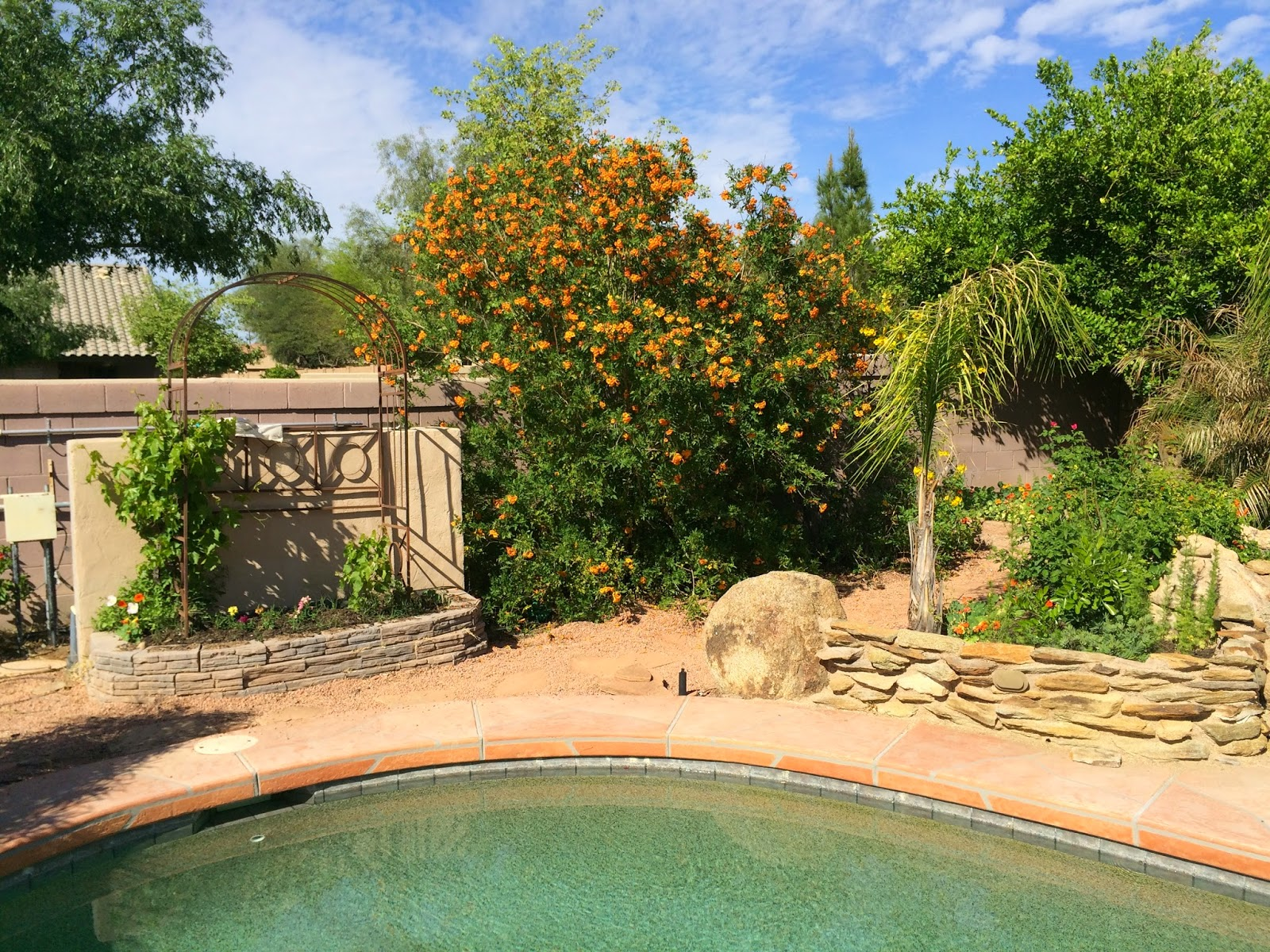 arizona backyard eden is it spring yet