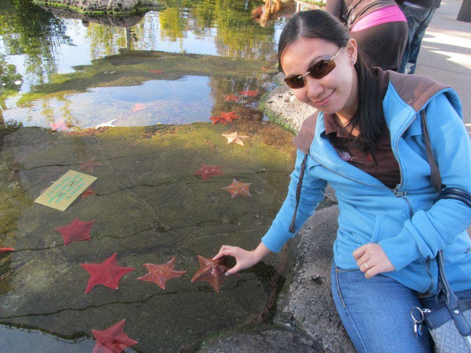 SeaWorld San Diego Starfish