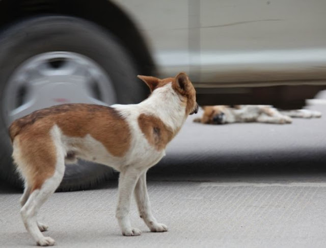 Dog mourns the death of his companion, dog friendship, dog love, sad dog