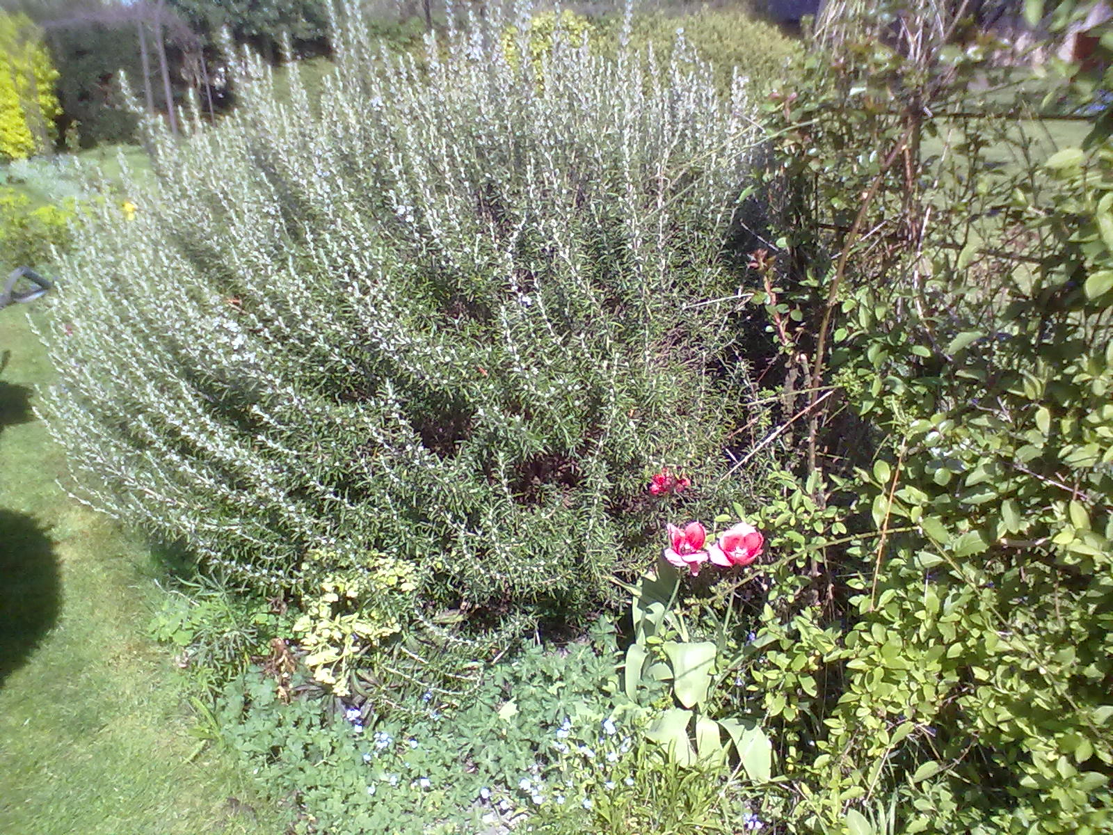 Watch How to Clear Large Shrubs video