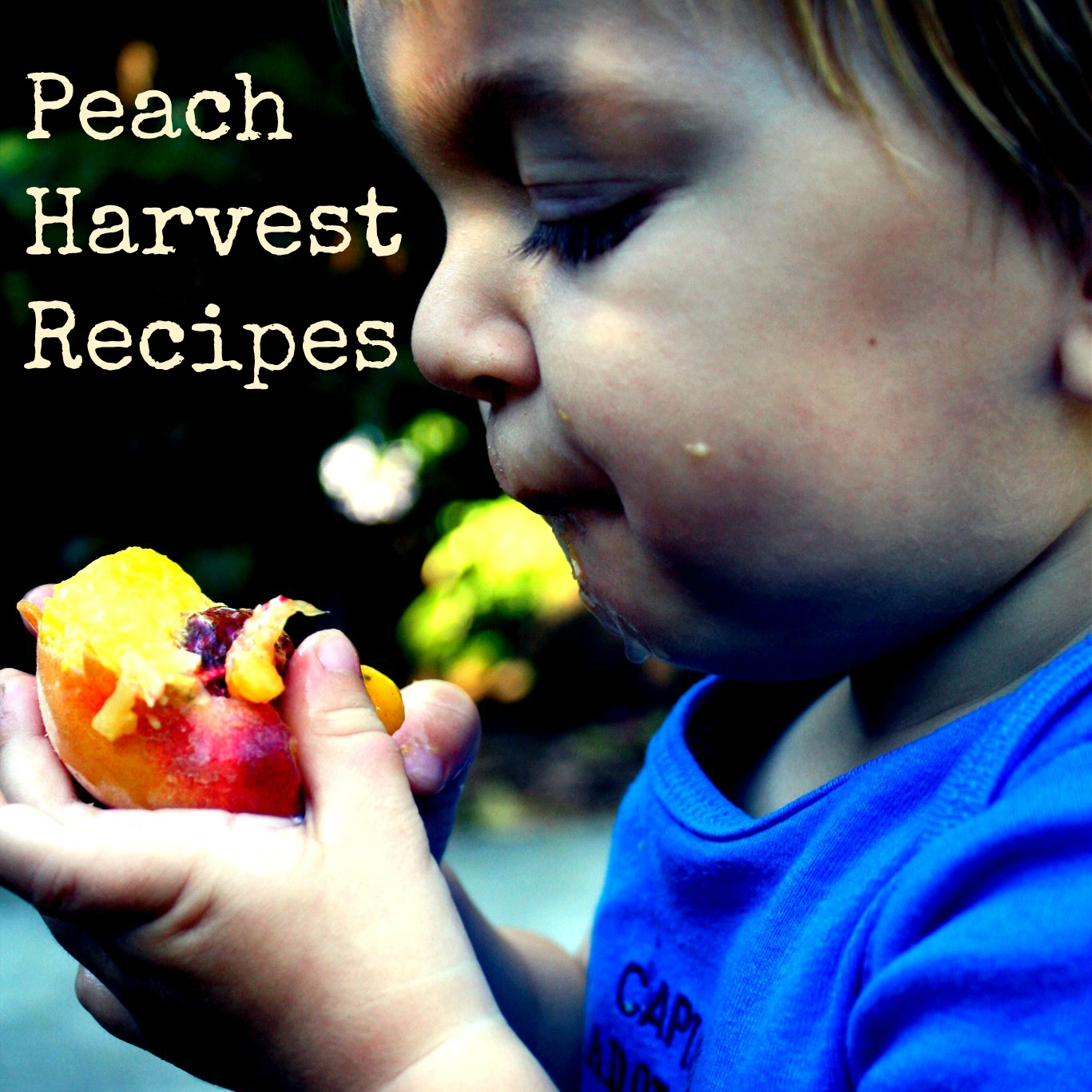 Peach Harvest Recipes