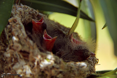 Monachus Monachus Apartments: baby birds in nest