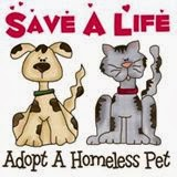 Support Animal Rescue and Adoption