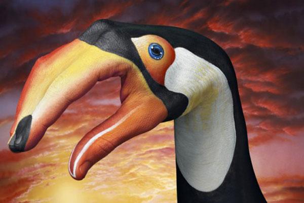 Toucan-on-sky