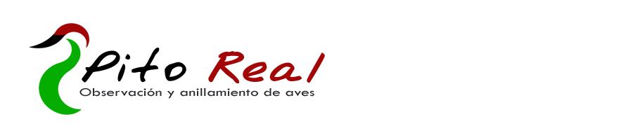 """""""Pito Real"""" - Ornitología"""