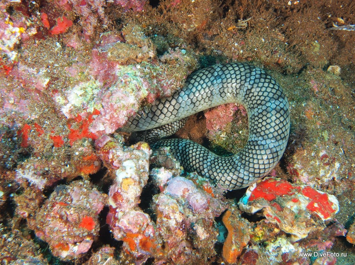 Морская змея в расщелине. фото