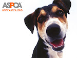 ASPCA Donations