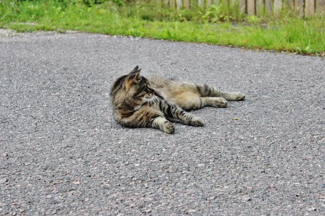 vaihtariblogi usa kissa suomi kesä maatiaiskissa lemmikki valokuvaaminen canon eos 600d vaihto-oppilas explorius